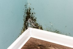 moldy wall black mold on wall water line repair waterline damage